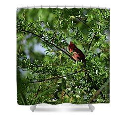Shower Curtain featuring the photograph Mr Red by Skip Willits