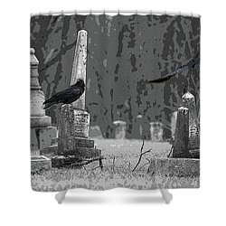 Murder Of Crows Shower Curtain by Rowana Ray