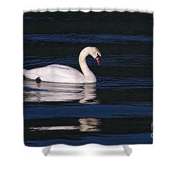 Shower Curtain featuring the photograph Mute Swan  by Sharon Talson