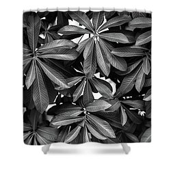Shower Curtain featuring the photograph Nature Background, Green Leaves, Flowers In Natural Light And Sh by Jingjits Photography