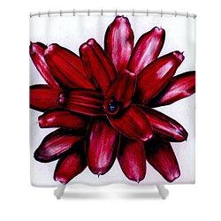 Neoregelia 'christmas Cheer' Shower Curtain