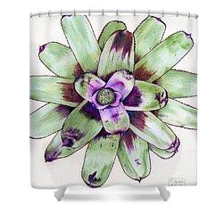 Neoregelia 'painted Delight' Shower Curtain
