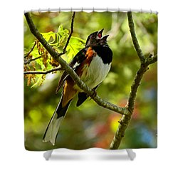 Towhee In Song Shower Curtain by Dianne Cowen