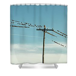 Not Like The Others Shower Curtain by Todd Klassy