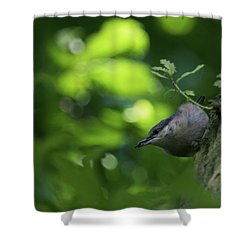 Nuthatch Shower Curtain