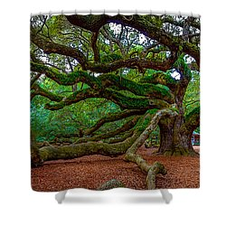 Old Southern Live Oak Shower Curtain
