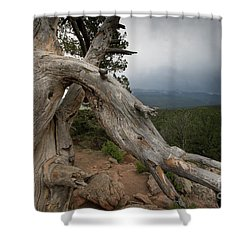 Old Tree On The Mountain Shower Curtain