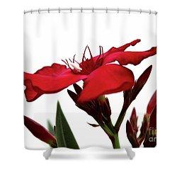 Oleander Blood-red Velvet 3 Shower Curtain by Wilhelm Hufnagl