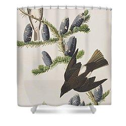 Olive Sided Flycatcher Shower Curtain