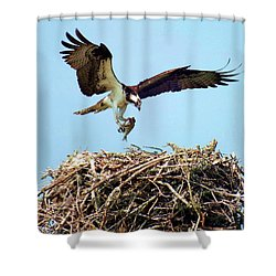 Open Wings Shower Curtain by Karen Wiles