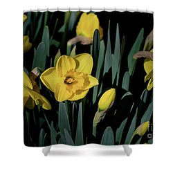 Camelot Daffodils Shower Curtain