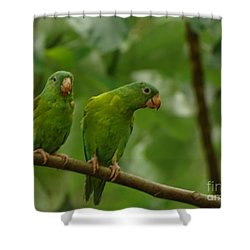 Orange -chinned Parakeets  Shower Curtain