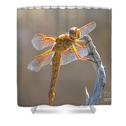 Dragonfly 5 Shower Curtain