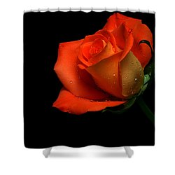 Orangette Shower Curtain by Doug Norkum