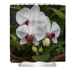Shower Curtain featuring the photograph Orchid by Christian Zesewitz