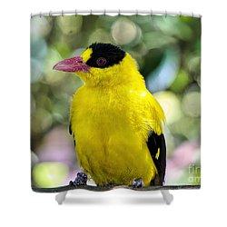 Oriole Wonder Shower Curtain