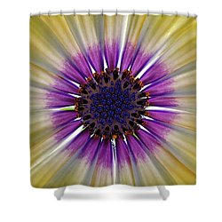 Osteospermum The Cape Daisy Shower Curtain