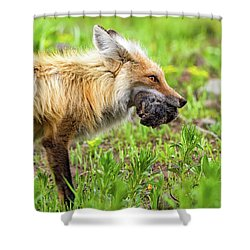 Out Foxed  Shower Curtain