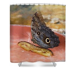 Shower Curtain featuring the photograph Owl Butterfly 2 by Paul Gulliver