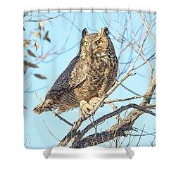 Owlish Shower Curtain