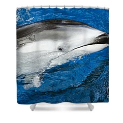 Pacific White-sided Dolphin Shower Curtain by Dave Fleetham - Printscapes