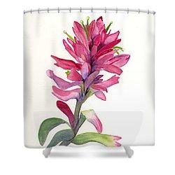 Paintbrush Shower Curtain