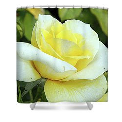 Pale Delight Shower Curtain