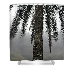 Palm, Koolau Trail, Oahu Shower Curtain