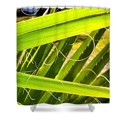 Shower Curtain featuring the painting Palmetto 3 by Renate Nadi Wesley