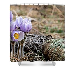 Pasque Flower Shower Curtain