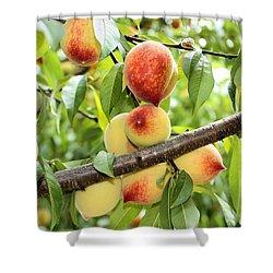 Shower Curtain featuring the photograph Peaches by Kristin Elmquist