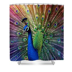 Peacock Shower Curtain by Hannes Cmarits