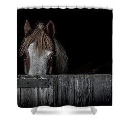 Peek A Boo Shower Curtain