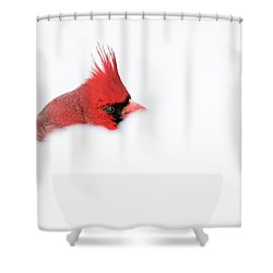 Shower Curtain featuring the photograph Peekaboo by Mircea Costina Photography