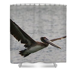 Pelican In Flight Shower Curtain by Laurel Talabere