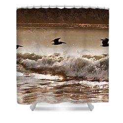 Pelican Patrol Shower Curtain by Jim Proctor