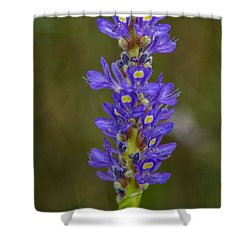 Pickerel Weed Shower Curtain by Christopher L Thomley