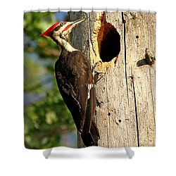 Pileated #26 Shower Curtain by James F Towne