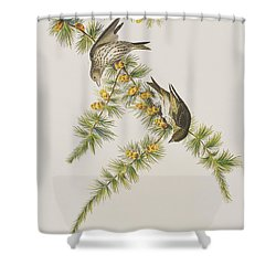 Pine Finch Shower Curtain by John James Audubon