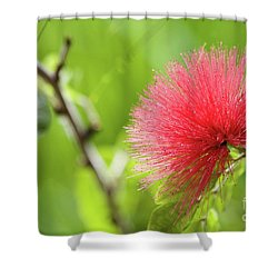 Pink Shower Curtain by Afrodita Ellerman
