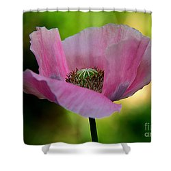 Shower Curtain featuring the photograph Pink Poppy by Lisa L Silva