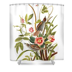 Shower Curtain featuring the photograph Pink Roses by Munir Alawi