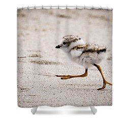 Piping Plover Chick Shower Curtain