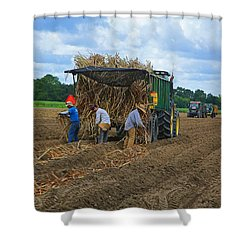 Planting Sugarcane Shower Curtain