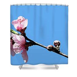 Plum Blossoms Shower Curtain by Kristin Elmquist