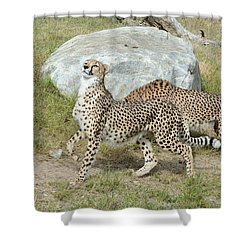 Shower Curtain featuring the photograph Poise by Fraida Gutovich
