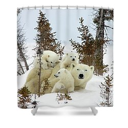 Shower Curtain featuring the photograph Polar Bear Ursus Maritimus Trio by Matthias Breiter