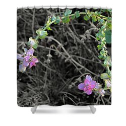 Pop Of Color  Shower Curtain by Deborah  Crew-Johnson