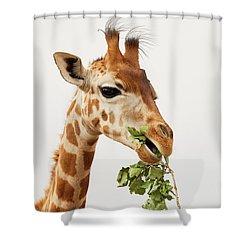Shower Curtain featuring the photograph Portrait Of A Rothschild Giraffe  by Nick Biemans