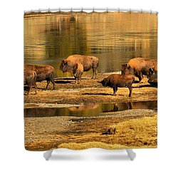 Shower Curtain featuring the photograph Gathering To Cross The Yellowstone River by Adam Jewell